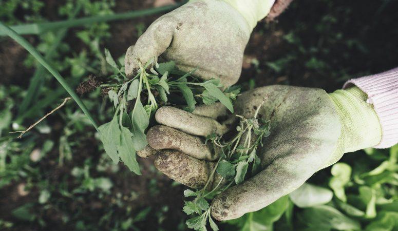 Weeding Our Spiritual Garden